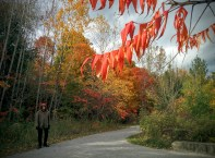 Fall colours at the Brickworks